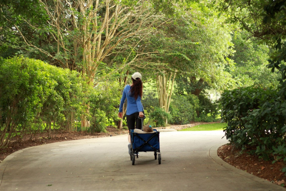 'THINK OUTSIDE THE WAGON' | WAYS TO STAY FIT